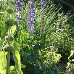 Pflanzung Naturgarten