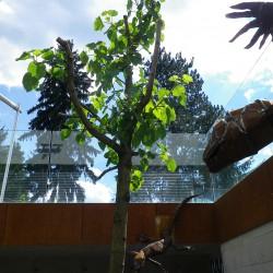 Garten Kunst Linz