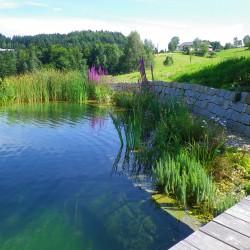 Schwimmteich Linz Land