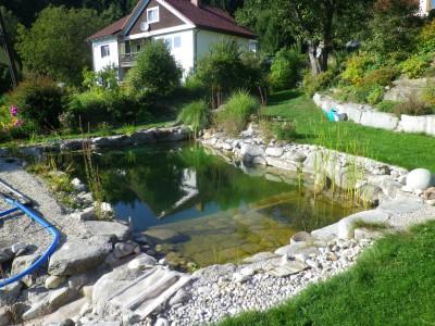 Umbau Schwimmteich zum Naturpool