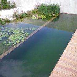 Schwimmteich Bezirk Melk