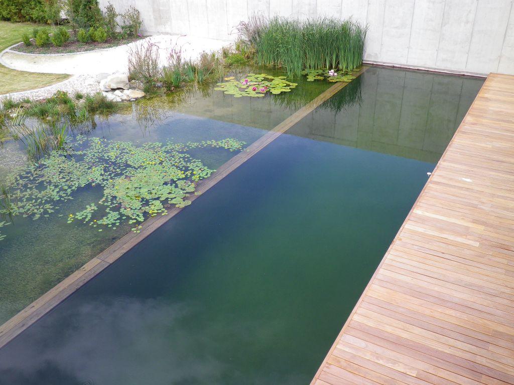 eolas garten - schwimmteiche zum sport, badespaß und natur genießen