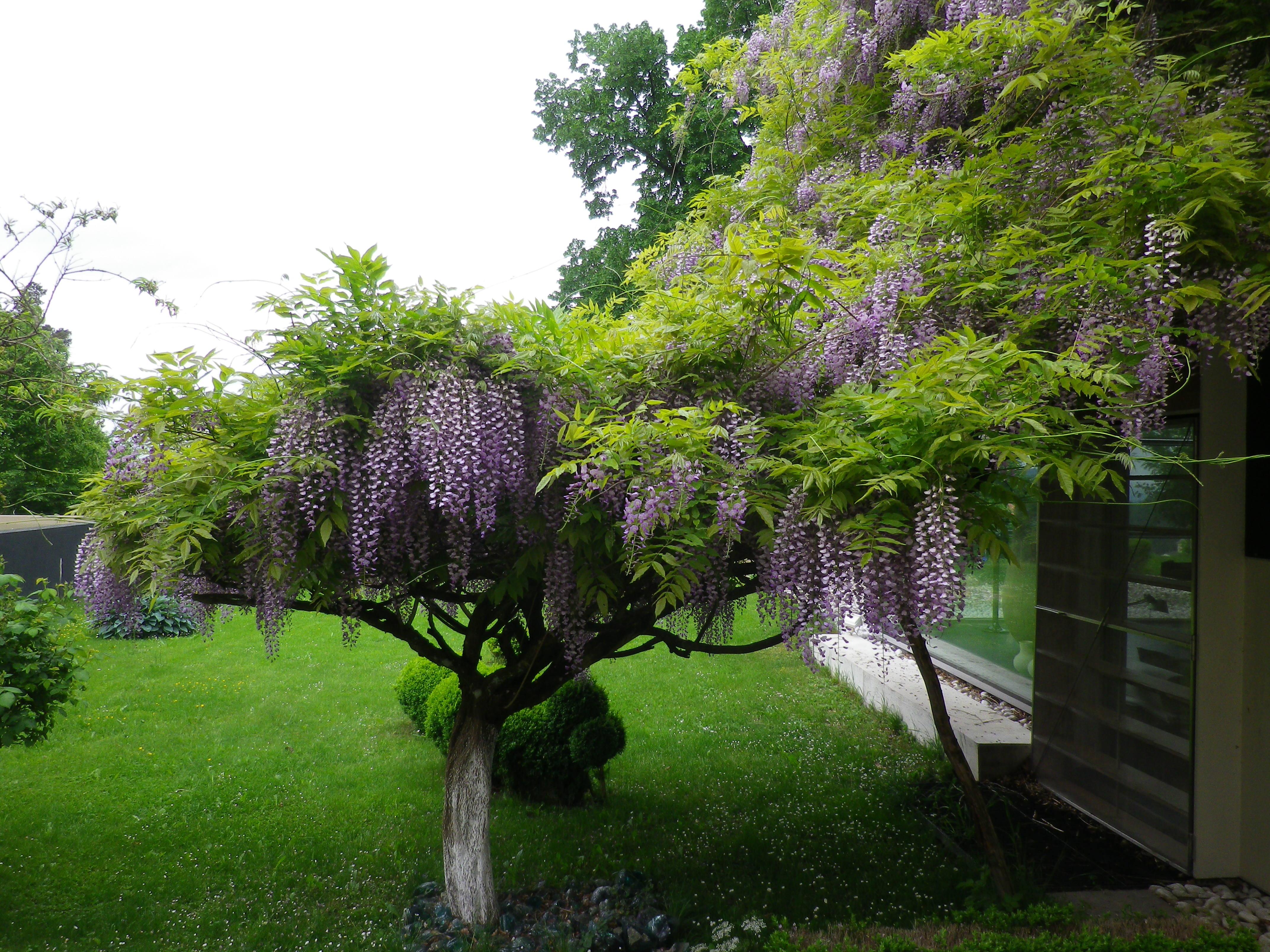 Pflanzen eolas gartengestaltung for Gartengestaltung pflanzen