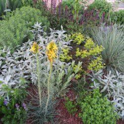 Pflanzen für trockene Stellen