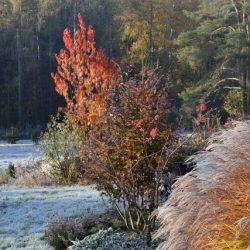 Herbst im Eolas Schaugarten OÖ
