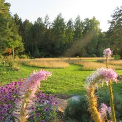 TEM im Garten