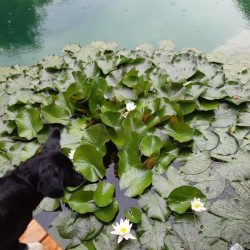 Schwimmteich mit Hund